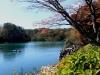 2014.10.19_-_Goshinkinuma_-_0001