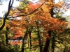 2014.10.19_-_Goshinkinuma_-_0063