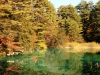 2014.10.19_-_Goshinkinuma_-_0090