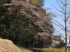 2014_Hanami-0135