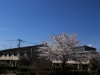 2014_Hanami-0139