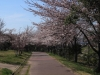 2014_Hanami-0165