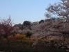 2014_Hanami-0205