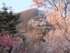 2014_Hanami-0282
