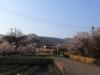 2014_Hanami-0330