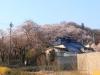 2014_Hanami-0333