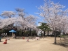 2014_Hanami-0353