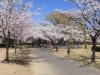 2014_Hanami-0354