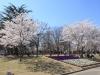 2014_Hanami-0380
