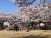 2014_Hanami-0422
